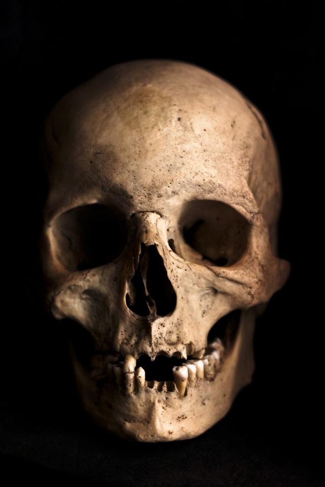 skull-765477_1920